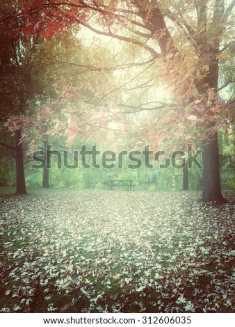 Hazy autumn day in a park. Quebec, Canada. - stock photo