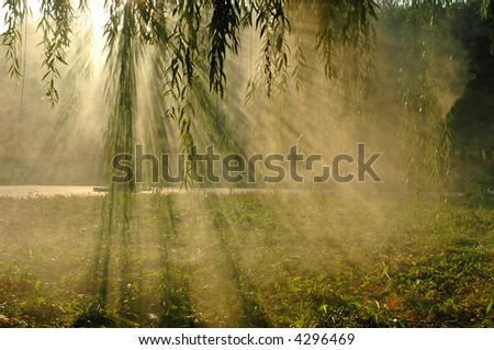 Hazy morning in soft focus - stock photo