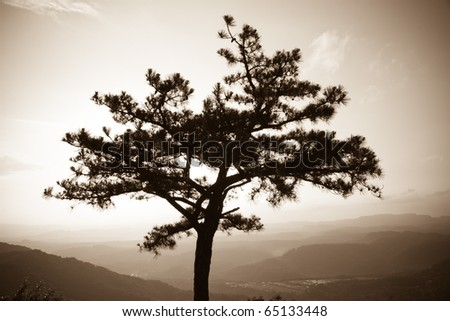 Hazy tree silhouette with mountains in the background - stock photo