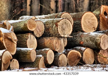 HDR.A pile of logs in the winter snow - stock photo