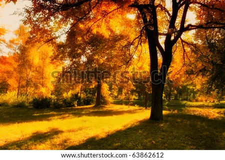 HDR image of a park in autumn
