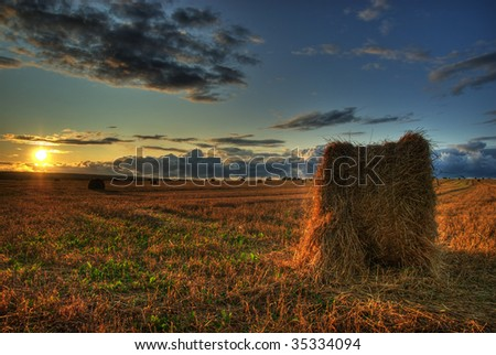 HDR image of an autumn field - stock photo