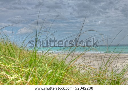 HDR image of grasses growing through sand on the beach