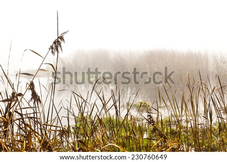 HDR image of reeds by the river on a foggy morning - stock photo