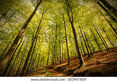HDR, old style, Beech Forest in Spring. Image taken with a wide-angle lens in a beech forest, Germany, Rothaargebirge. A forest track leading to the background. Vignette added. - stock photo