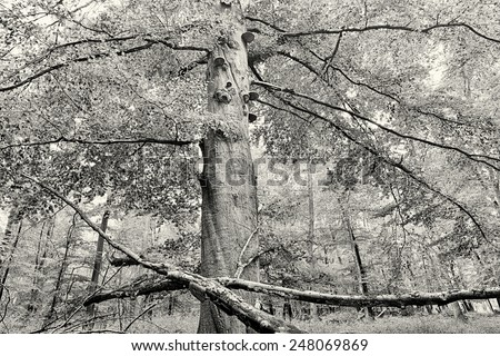 HDR shoot of a beech forest in autumn, vintage version - stock photo