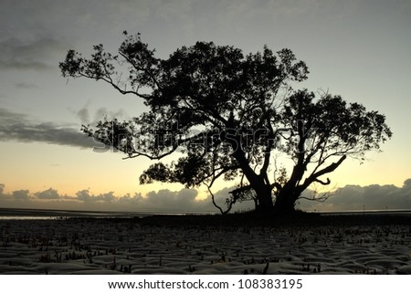 hdr Silhouette of magrove tree nudgeee beach australia brisbane