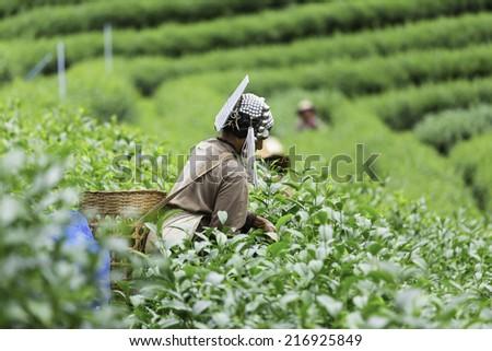 He currently holds the tea Dubai - stock photo