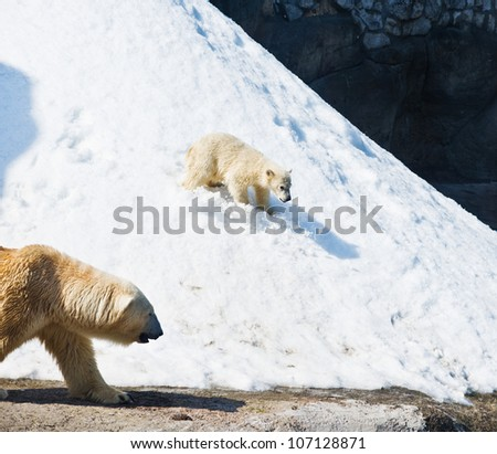 he polar she-bear with kid - stock photo