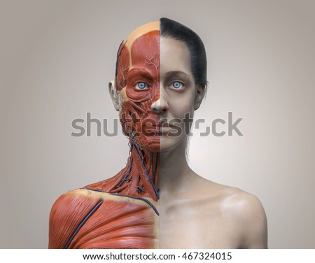 Female Neck Anatomy
