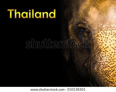 head,face Thai elephant sad - stock photo