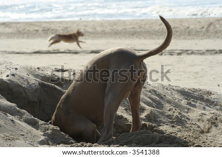 Head In The Sand - stock photo