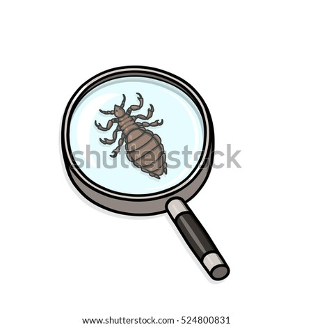 Head lice under magnifying glass illustration