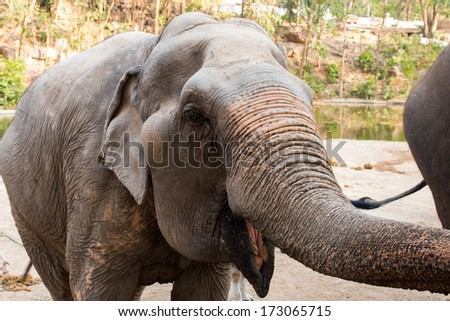 head of a Asian elephant in open zoo - stock photo