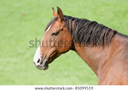 Head of a brown horse isolated against the green background of the meadow - stock photo