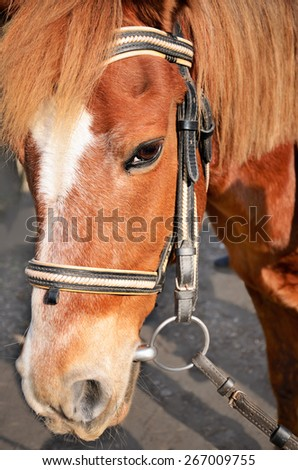 head of a brown horse with a white spot on it face close-up. vertical - stock photo