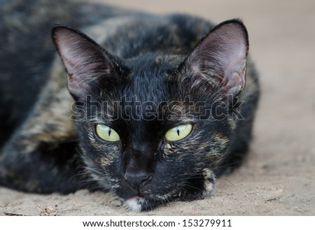 Head of a cat,with alert look. - stock photo