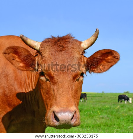 Head of a cow against a pasture - stock photo