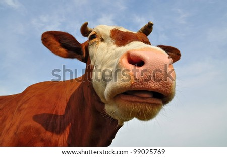 Head of a cow against the sky.