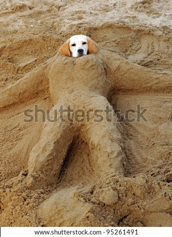 Head of a dog buried in the Sand - stock photo