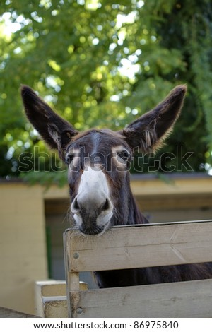 head of a donkey looking at you - stock photo