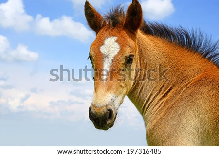 Head of a foal against the sky