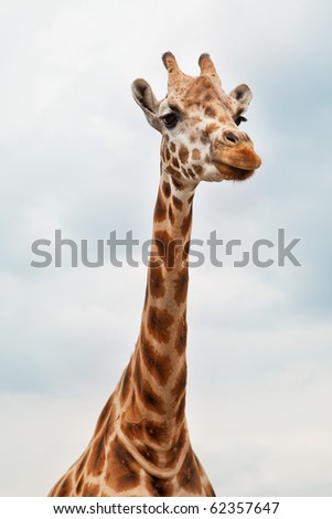 Head of a Giraffe in the wild against the sky - stock photo