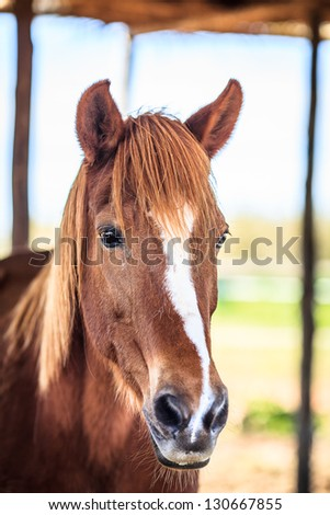 Head of a horse - stock photo