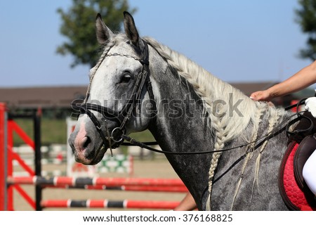 Head of a  jumping horse in dressage. Braided mane for dressage - stock photo
