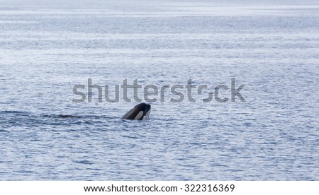 Head of a Orca above the water in Johnstone strait, Vancouver Island, British Columbia, Canada - stock photo