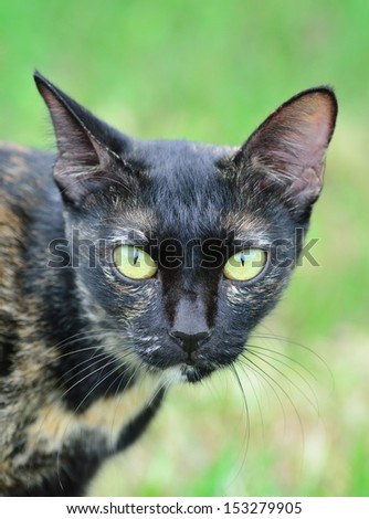 Head of a sitting cat,with alert look - stock photo