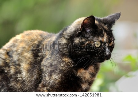Head of a sitting cat, with with alert look. Body and background blurred - stock photo