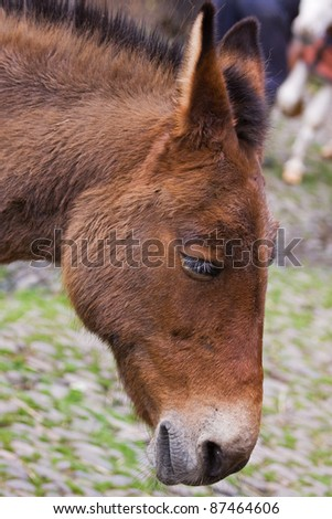 Head of a working donkey - stock photo