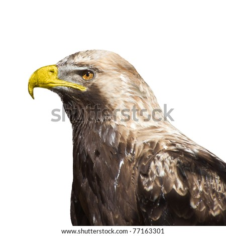 Head of an eagle isolated on white background