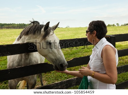 Head of an old grey horse in meadow leaning on a wooden fence being fed by senior lady - stock photo