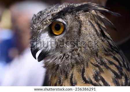 Head of an owl