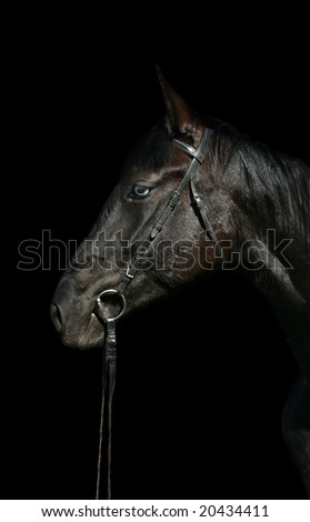 Head of black horse with blue eye - stock photo