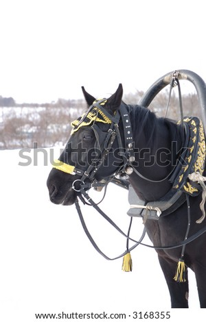 Head of black horse with harness decorated with jingles and straps. Photo taken in winter in Russia - stock photo
