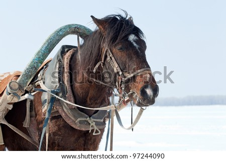Head of brown horse with harness.