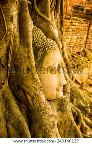 Head of buddha in root at Ayuthaya province, Thailand - stock photo