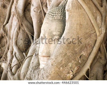 Head of Buddha in the tree  at Wat Mahathat temple, Ayutthaya, Thailand, Asia