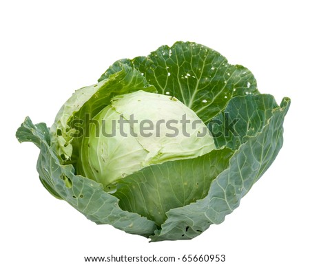 Head of cabbage. Ingredients for salad. Clipping Path. - stock photo
