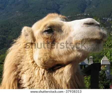 Head of camel, mountains around.