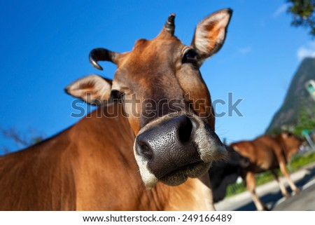 Head of cow closeup on blue sky background - stock photo