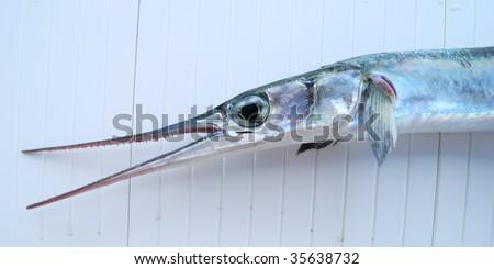 Head of fish-saw - stock photo