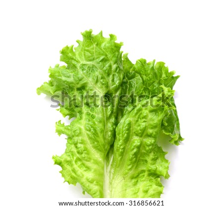 Head of fresh crispy leafy green Californian lettuce isolated on white viewed from above to be used as a healthy salad ingredient and garnish - stock photo