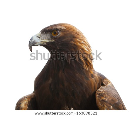 Head of golden eagle bird isolated on white background - stock photo