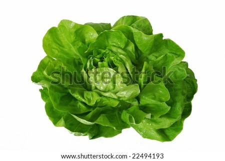 head of green fresh lettuce isolated over white - stock photo