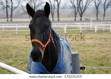 Head of horse in stud farm Albertovec, Czech republic - stock photo