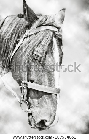Head of horse on gray background - stock photo